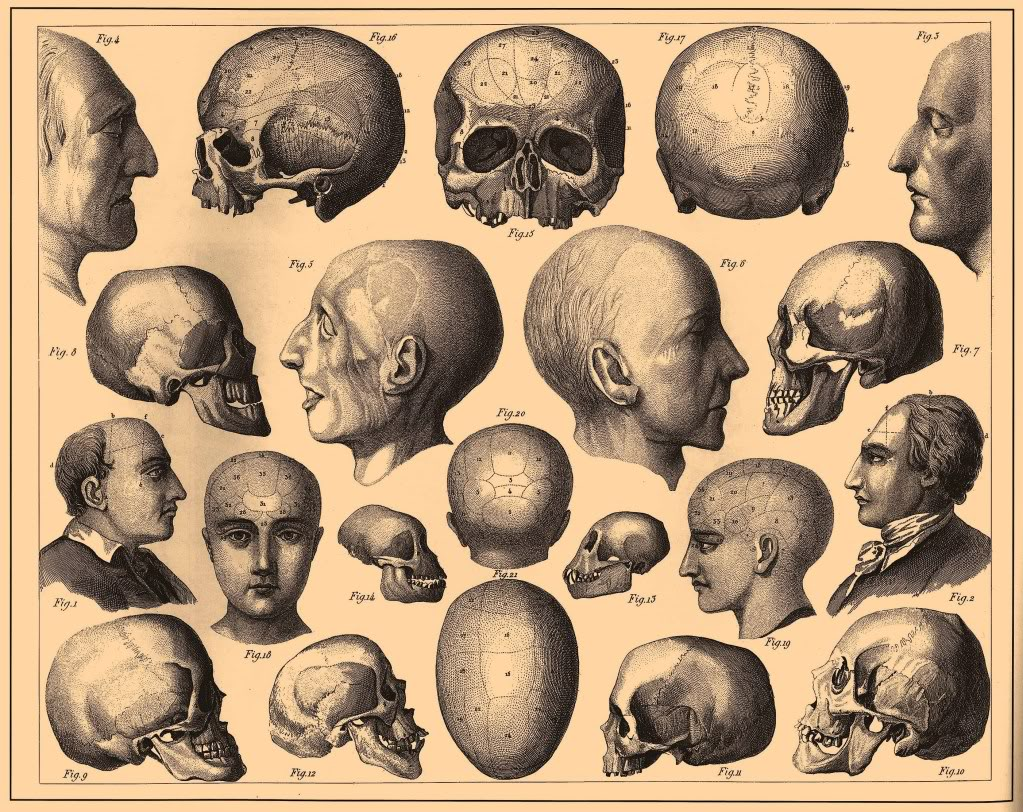 Phrenology poster free graphics